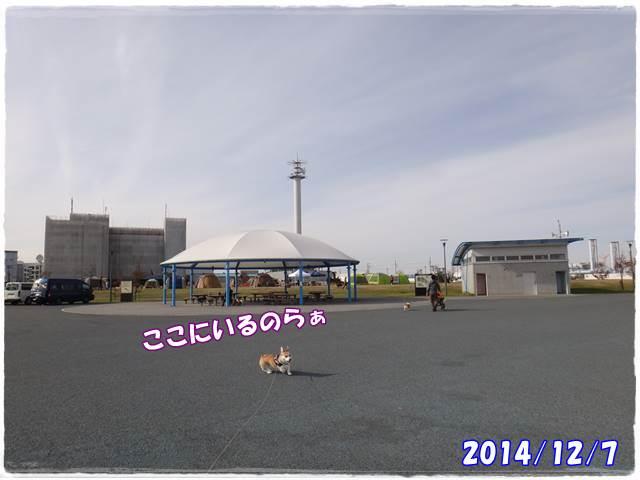 20141207-51.jpg