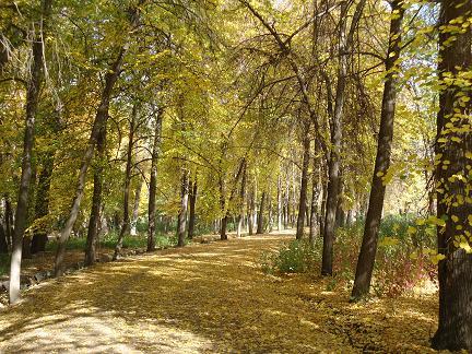 アタトルク公園紅葉1