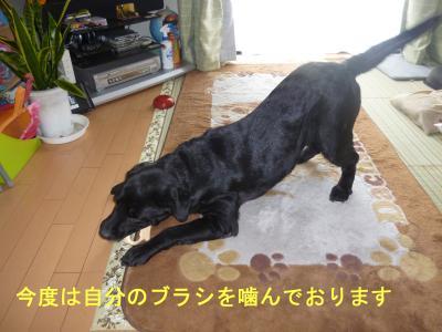 001_convert_20120506213326.jpg
