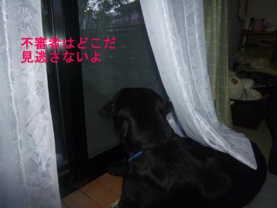 004_convert_20120511200856.jpg