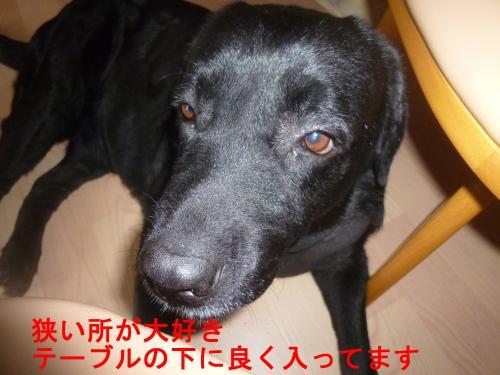 004_convert_20120707152330.jpg