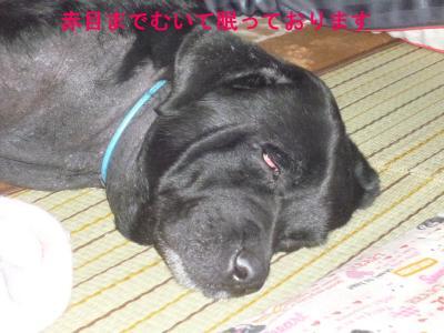 005_convert_20120506215009.jpg