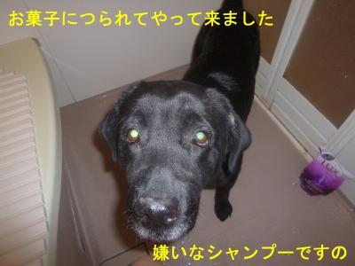010_convert_20120519165236.jpg