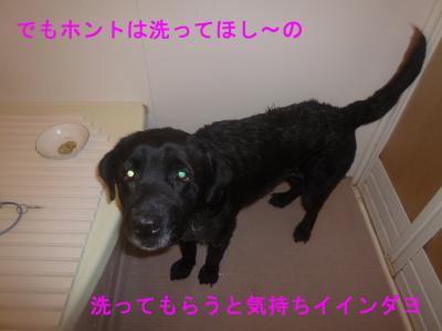 011_convert_20120519171745.jpg