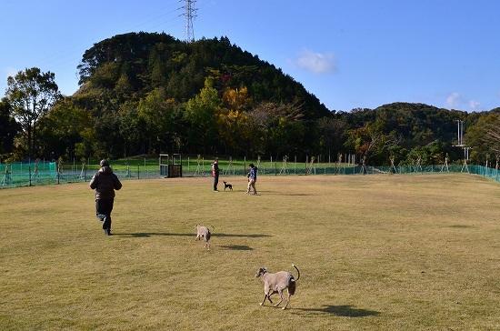 20121124_06592D7ts-.jpg