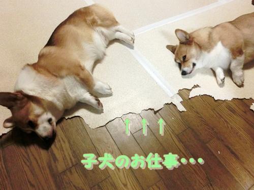 子犬のお仕事・・・&寝る