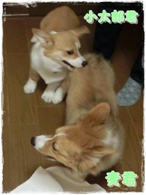 小太郎君&麦君