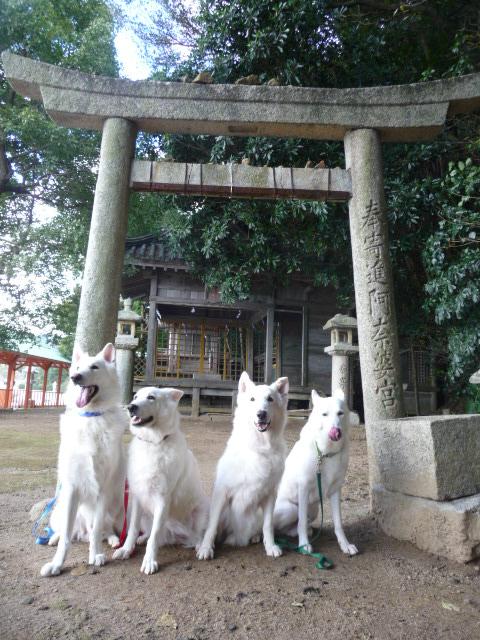 阿奈波神社女性の神様を祀ってあります