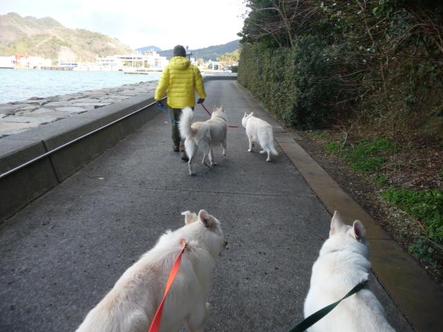 参道をゆっくりと4匹を連れてお散歩