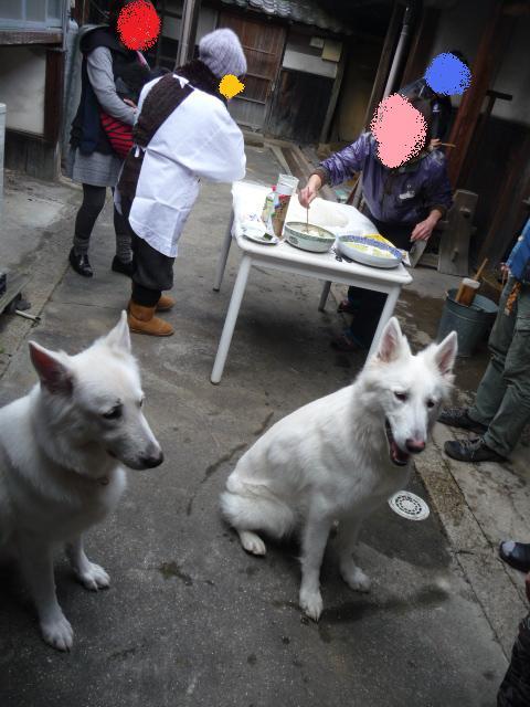 ホワイトスイスシェパード★ランスロット★&★リサ★餅つきを見守る