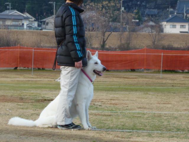 ホワイトスイスシェパード★タキオン★とママさん