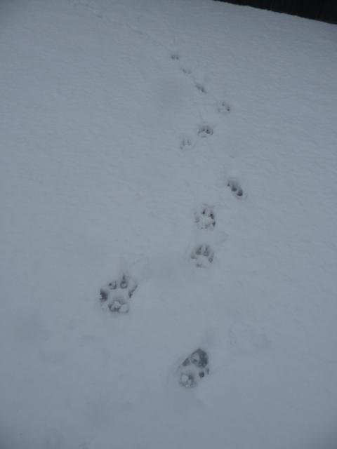新雪の足跡が好き