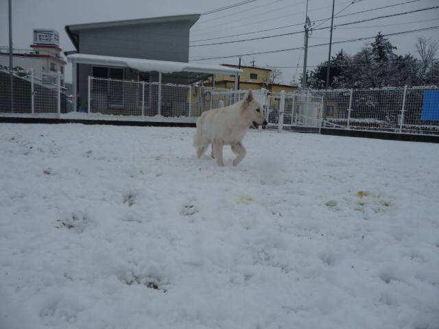 ★アブー★10才雪を満喫