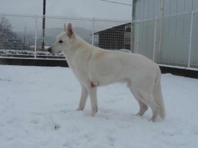 ★レオン★11才雪を眺める