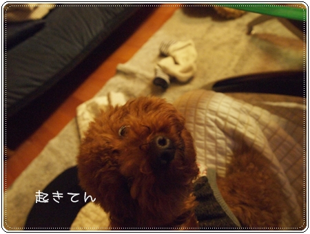 2012 11 25_3640