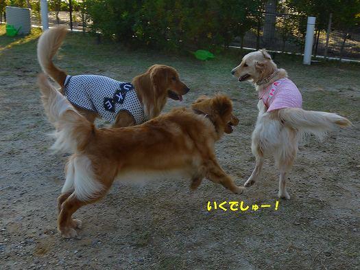 11_20121102182741.jpg
