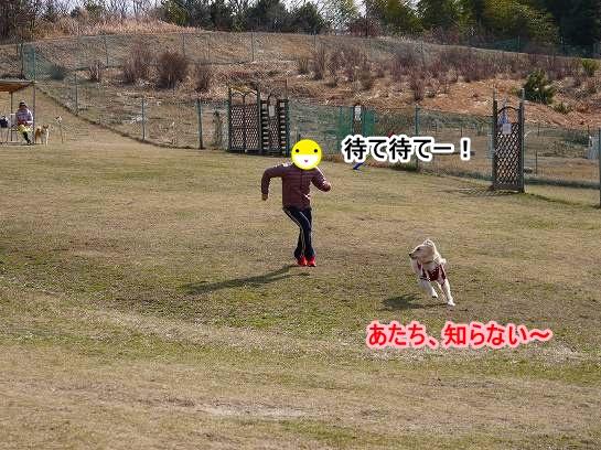 11_20130217213941.jpg
