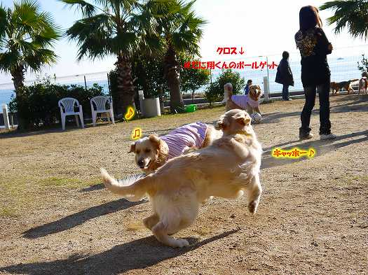 13_20121206230523.jpg