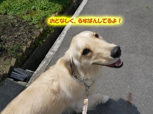 20120518-10_20120520215339.jpg