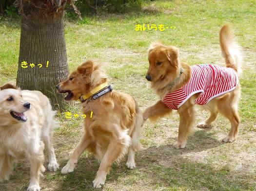 2_20121014215957.jpg