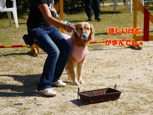 4_20121102182700.jpg