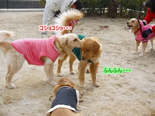 4_20130201234100.jpg