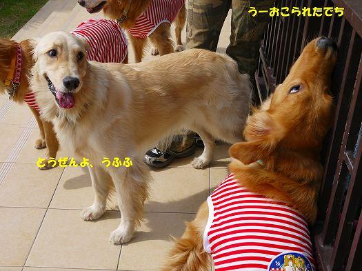 9_20121014220031.jpg