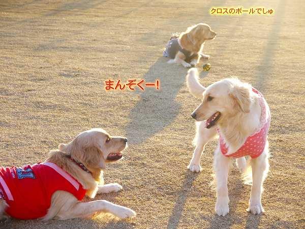 9_20121229080739.jpg