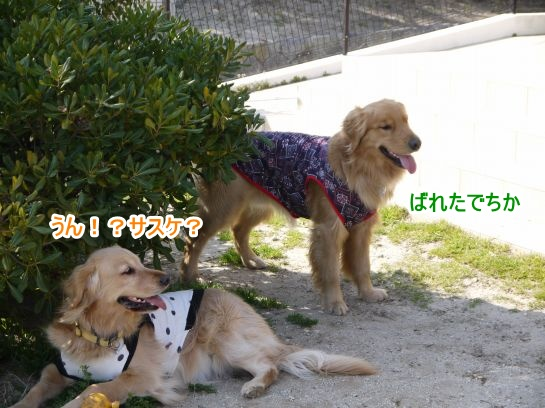 s-12_20130328205429.jpg