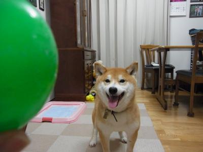 早く 投げて~!