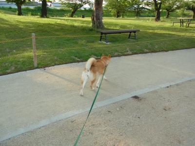 軽快に歩きます!