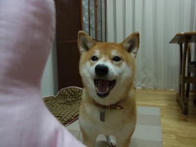 投げて~!