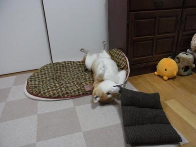 目覚めのひとカミ