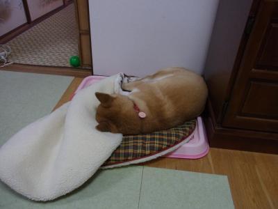 寝ちゃった…