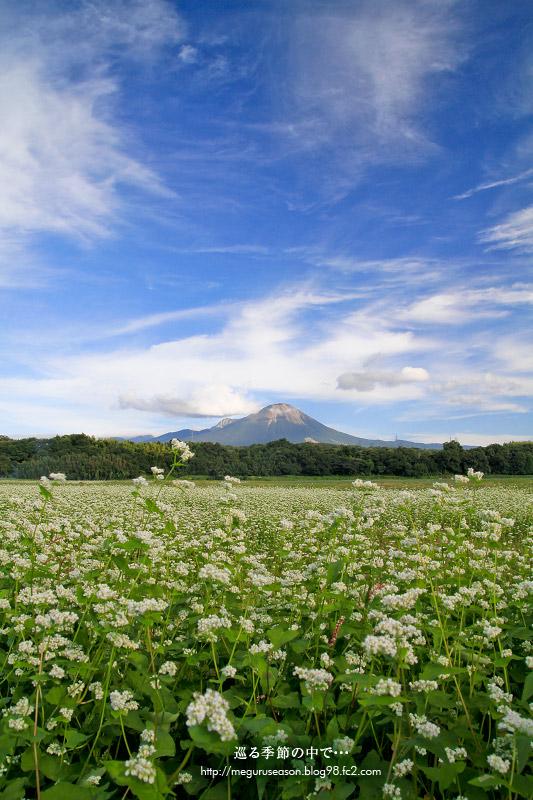 大山 蕎麦畑