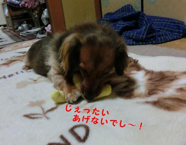 1205_20121212223754.jpg