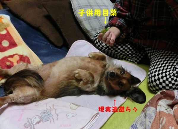 2202_20121222091636.jpg