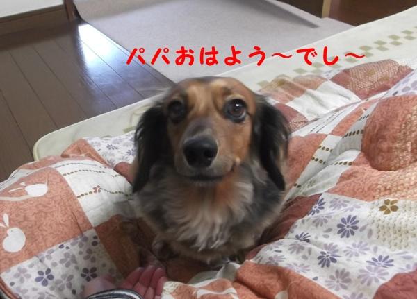 2302_20121123224037.jpg