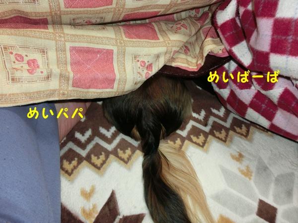 2302_20121223164354.jpg