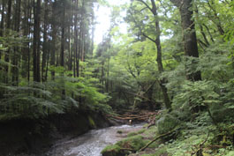 2012OitaShikoku (63)small