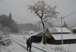 雪に覆われた新見市千屋花見地区=6日午前8時30分