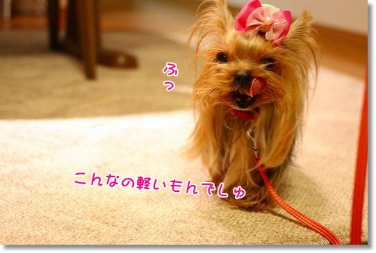 IMG_0404a.jpg