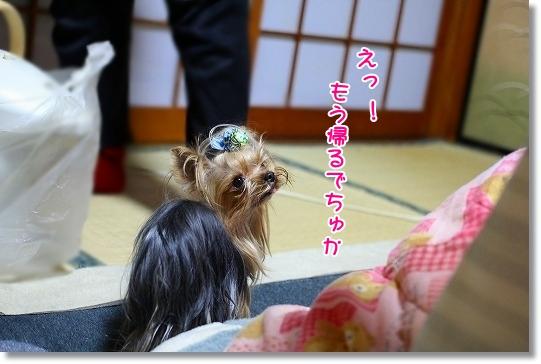 IMG_9885.jpg