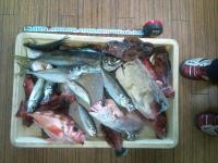 ササキ釣果