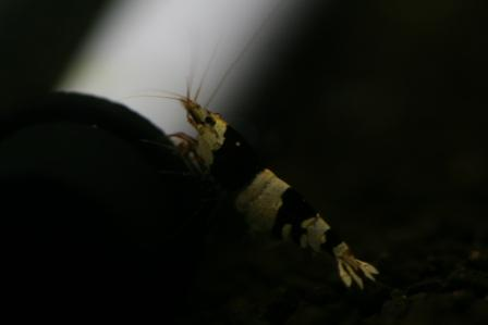 2012.12.07 1 (16)