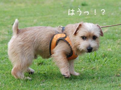 2012-07-01_09.jpg