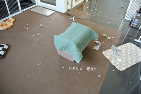 2012-09-09_03.jpg