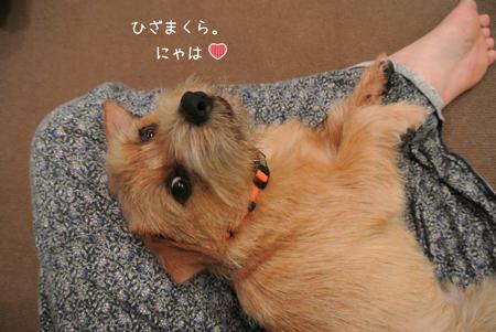 2012-09-20_05.jpg