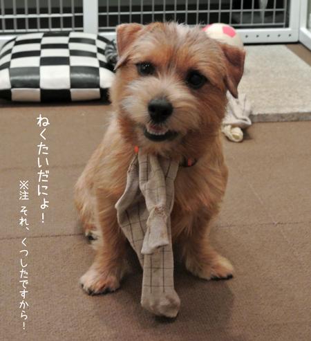 2012-11-11_11.jpg