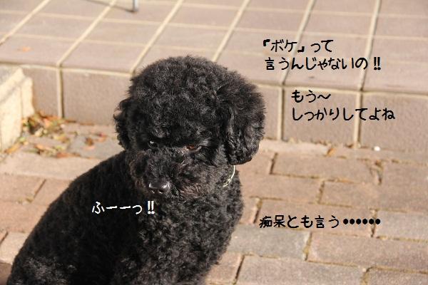 05_20130118232635.jpg